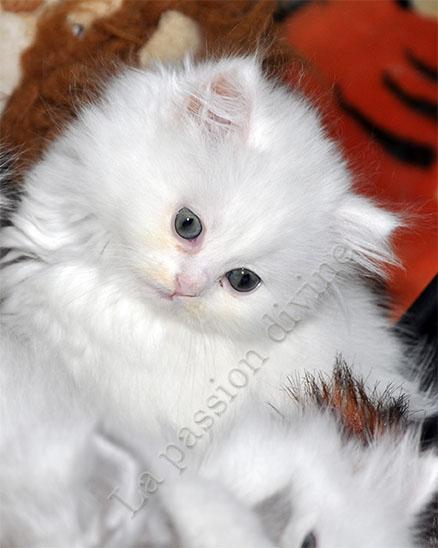 http://la-passiondivine.fr/images/chaton2010/forum/miss.jpg